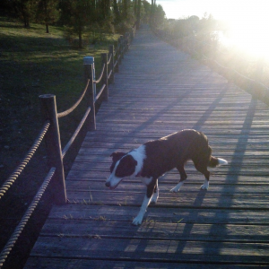 locais para passear o cão no distrito de Santarém