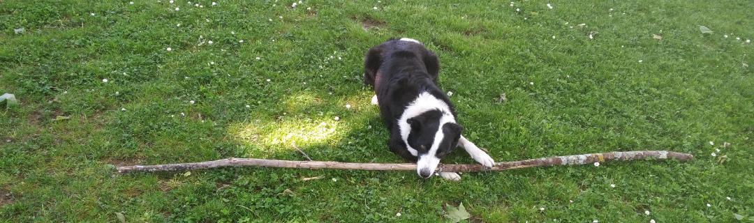 As vantagens de ter um cão