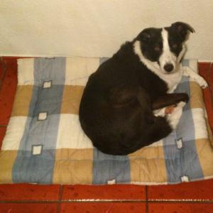 cama para cao reino by pixie